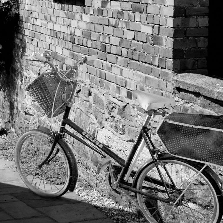 bike-fennel